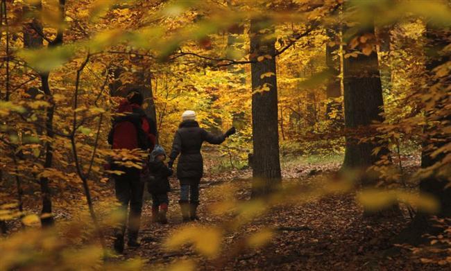 Groupement Forestier d'Investissement : de multiples atouts pour diversifier son patrimoine
